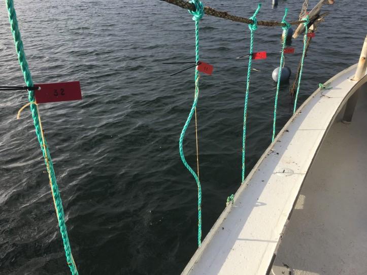 Kerteminde Maritime Haver_1